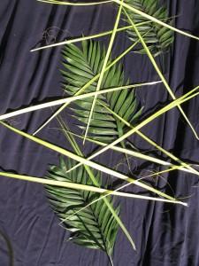 Palms_0319